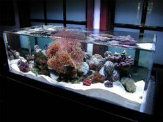 zeroedge fish tank decoration ideas