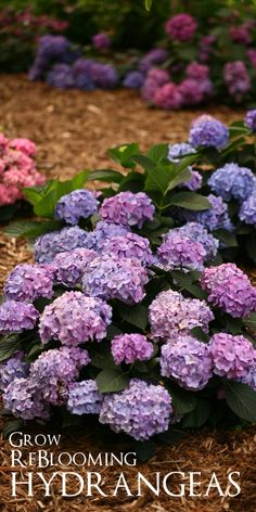 Swoon! Give your garden the blues with reblooming hydrangeas. I love all the color variations. Win $250 in flowers to make your garden pop with the Proven Winners Dream Garden Sweepstakes #ad