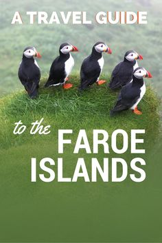 A Travel Guide to the Faroe Islands. Visiting here requires a decent amount of planning; if you rocked up expecting to walk straight into a hotel and land yourself a bed without booking in advance, there's a high chance you'll find yourself uncomfortably waking up with a flock of sheep. Read more... #travel #guide