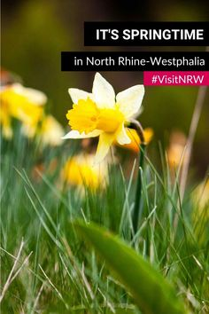 The days are getting longer and the sun is shining. We have collected some spring excursion tips in North Rhine-Westphalia for you. Go out, get some fresh air and enjoy! #VisitNRW #holidays #Germany #spring #dayout #sunshine © Tourismus NRW e.V. North Rhine Westphalia, Spring Time, Holidays Germany, Tourism, Tips, Sunshine, Fresh, Unique, Turismo