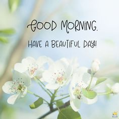 Good morning image with fresh white flowers. Good Morning Wednesday, Good Morning Cards, Good Morning Funny, Happy Morning, Good Morning Sunshine, Good Morning Picture, Good Morning Messages, Good Morning Greetings, Good Morning Good Night