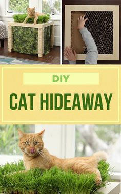Cat Hideaway Table - Tap the link now to see all of our cool cat collections! Diy Pet, Diy Cat Toys, Cat Grass, Cat Hacks, Cat Garden, Cat Room, Animal Projects, Diy Stuffed Animals, Crazy Cats