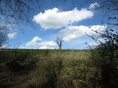 相片:A dead pear tree, still in the center at the horizon...