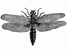 Vintage Black and White Dragonfly Illustration - Click for larger printable clip art
