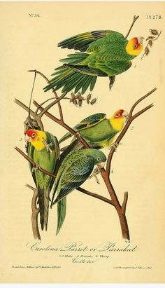 The Birds of America: From Drawings Made in the United States and Their Territories John James Audubon