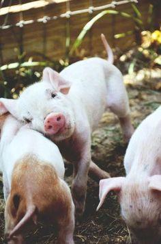 'piglet love', found on umla