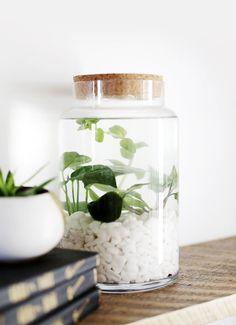 DIY Indoor Water Garden @themerrythought #watergardens