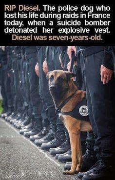RIP Diesel ;(