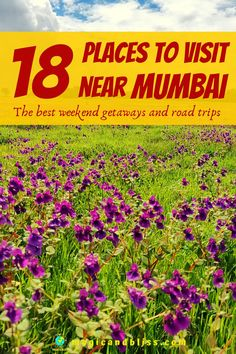 Learn about 18 places to visit near Mumbai. Plan you weekend getaways from Mumbai and road trips in Maharashtra. Learn what to do in Maharashtra especially during monsoon season. In my blog you will find places to trek in western ghats, off beat spots to visit, Maharashtra travel guide and itinerary all within driving distance from Mumbai. The post covers all type of travelling needs - adventure, relaxation and sightseeing. #offbeat #maharashtra #indiatravel #mumbai China Travel, Japan Travel, Best Weekend Getaways, India Travel Guide, Beautiful Places To Travel, Travel Alone, Future Travel, Travel Around The World, Road Trips