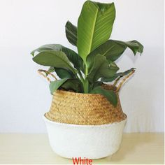 TIANTIAN Garden Flower Pot Natural Seagrass Basket Woven Plant Pot Handmade Belly Basket Rattan Straw Basket Foldable Seagrasss Flower Baskets with Handle for Storage Laundry Picnic Plant Pot, White Basket Planters, Planter Pots, Plant Basket, Wicker Baskets, Bamboo In Pots, Toy Storage Baskets, Laundry Storage, Laundry Organizer, Pot Storage