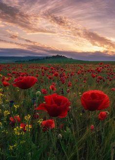 ~Chobbit Hobbit's Nature Corner~ : Photo ~Chobbit Hobbit's Nature Corner~ : Photo Flowers Nature, Wild Flowers, Beautiful Flowers, Beautiful World, Beautiful Places, Science And Nature, Nature Pictures, Amazing Nature, Pretty Pictures