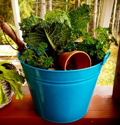 bucket garden - puutarha ämpärissä Bucket Gardening, Planter Pots