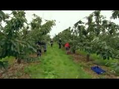 BBC Documentary 2014 Our Food Kent BBC Documentary - YouTube