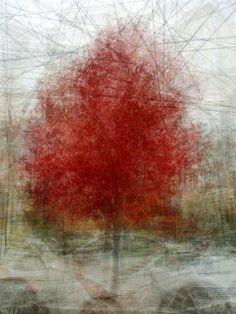 오늘의유머 - 단 한 그루의 나무. 사진 작가 PEP VENTOSA