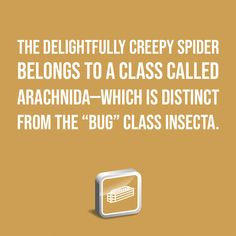 """The delightfully creepy spider belongs to a class called Arachnida—which is distinct from the """"bug"""" class Insecta. Discover more: A Texas-Size Spider Mystery Institute For Creation Research, Discovery, Spider, Creepy, Mystery, Texas, Awesome, Animals, Spiders"""