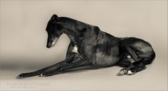 Greyhound photographer
