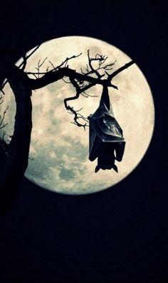 Full Moon                                                                                                                                                      More