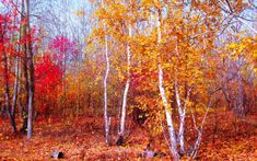 Preview wallpaper crimson, gold, red, autumn, nature, trees, leaves, october, forest, silence, maple