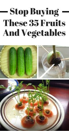 Veggies That You Can Grow At Home - indoor garden 35 Fruits amp; Veggies That You Can Grow At Home - Regrow Vegetables, Home Grown Vegetables, Growing Veggies, Growing Plants, Vegetables To Grow Indoors, Easiest Vegetables To Grow, Regrow Celery, Green Onions Growing, Growing Lettuce