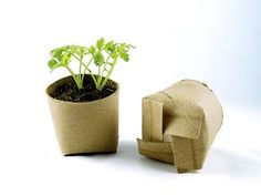 Seed starting in toilet paper rolls! I knew there was a good reason I save toilet paper rolls! Container Gardening, Gardening Tips, Organic Gardening, Organic Farming, Vegetable Gardening, Permaculture Garden, Gardening Quotes, Vegetable Planters, Permaculture Design