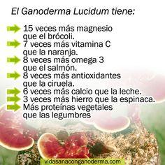 El Ganoderma Lucidum un superalimento considerado el REY DE LOS ANTIOXIDANTE  #salud #saludable #vidasaludable #vidasana #vida #superalimentos #bogota #medellin #medellín #cucuta #cali #bucaramanga #colombia #colombiana #colombian #hechoencolombia Rey, Vegetarian, Vitamin E, Health And Beauty, Healthy Living, Benefits Of Coffee, Anxiety, Fungi