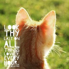 There's a lot of lovely around if you watch for it. #quotes #instaquote #quoteoftheday #quotestagram #quotestoliveby #orangecat #cat #quotestoliveby #quotesgram #instacat #catstagram #meow #catsofinstagram #catblog