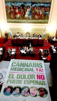 #Es ley el uso medicinal del cannabis - ElLitoral.com: ElLitoral.com Es ley el uso medicinal del cannabis ElLitoral.com El Senado de la…