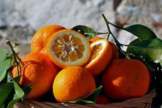 L'arancio è un albero della famiglia delle Rutacee, che può arrivare anche a 6-7 metri di altezza, con foglie verde scuro, coriacee e fiori bianchi