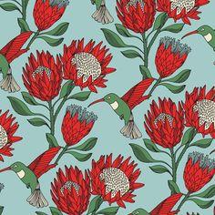 Proteas - Google 搜尋