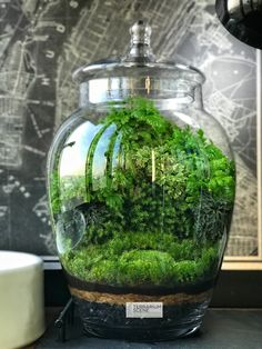 Image may contain: plant Air Plant Terrarium, Garden Terrarium, Succulent Terrarium, Paludarium, Vivarium, Indoor Water Garden, Indoor Gardening, Mini Plants, Plants Indoor