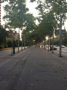 Tranquility while running in the morning...ave Diaganol