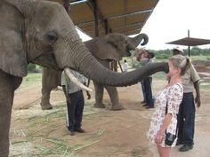 【癒しのソフトタッチ】動物たちの可愛すぎる「ちょん」画像20選 | CuRAZY