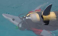 Scuba Dive Cape with Alpha Dive Centre Dive Shops and School. Take your scuba diving gear, swim with seals in the Atlantic or explore wrecks in False Bay. Dive Shop, Scuba Diving Gear, Fundraising Events, Cape Town, Diving Equipment, Scuba Gear