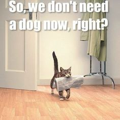 So, we don't need a dog now, right? Cute Funny Animals, Pictures Of Cute Animals, Funny Animal Pictures, Funny Cute, Cat People, Funny Kitties, Silly Cats, Cute Cats And Kittens, Memes Humor