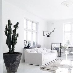 Obsessed with white spaces and overbearing plants via @miss_gunner