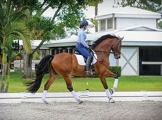 Exercises to Develop Your Horse's Straightness and Collection   Dressage Today