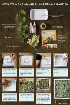 Looking for handmade gift ideas for the holidays? Make this Air Plant Frame Garden for the houseplant lover on your list.
