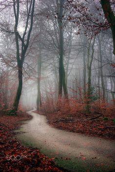 Walking invite.... by Ton lع Jeune on 500px