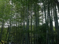 写真集 - Jimdo 独自レイアウトのホームページ作成ならgariken design Trunks, Plants, Drift Wood, Tree Trunks, Plant, Planets