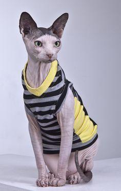 Sphynx Cat Wear clothing