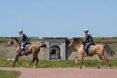Chevaux, Fort Nieulay©Ville de Calais DR