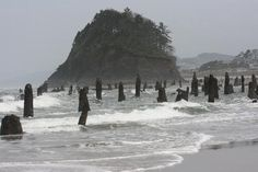 Neskowin, OR: Ghost Forest at Proposal Rock