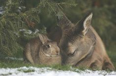 This was taken in Alberta, Canada in a back yard... Bambi & Thumper really do exist! Artist: unknown
