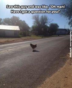 funny animals, laugh, funny animal pics, funny pictures, funni