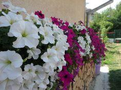 Čarovné balkóny našich čitateľov: Pozrite, ako krásne stále všetko kvitne