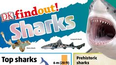 Free learning resources on pirates and sharks.