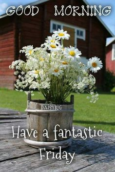 Daisy bouquet on the farm Happy Flowers, Wild Flowers, Beautiful Flowers, Lace Flowers, My Flower, Flower Power, Bouquet Champetre, Daisy Hill, Good Morning Friday