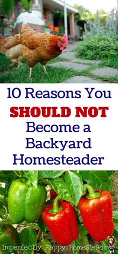 10 Reasons You SHOULD NOT Become a Backyard Homesteader or Urban Farmer.