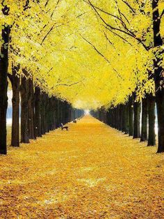 12 Awesome Places That Worth To Be Seen (Yellow and black autumn in Hanover,Germany)
