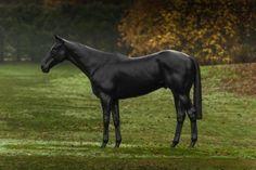 Mark Wallinger, The Black Horse, 2015